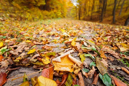 Colorful autumnal landscape with deciduous forest and many fallen leaves Stock Photo - 11151492