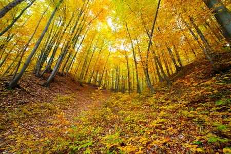Colorful autumnal landscape with deciduous forest and many fallen leaves Stock Photo - 11151501