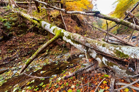 Landscape with fallen trees and a creek in the autumn Stock Photo - 11151508