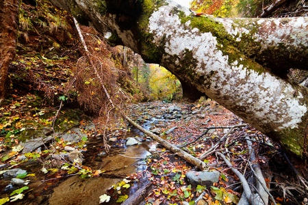 Landscape with fallen trees and a creek in the autumn photo