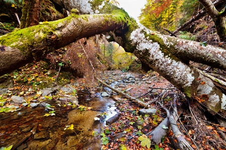 Landscape with fallen trees and a creek in the autumn Stock Photo - 11151520
