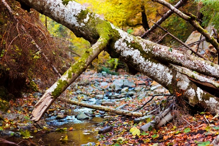 fallen tree: Landscape with fallen trees and a creek in the autumn