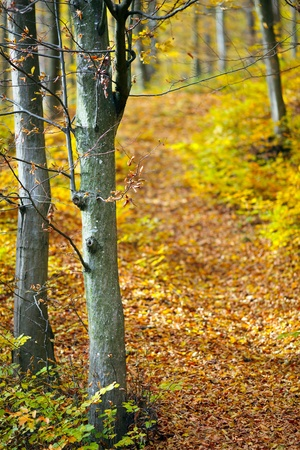 Colorful autumnal landscape with deciduous forest and many fallen leaves Stock Photo - 11151502