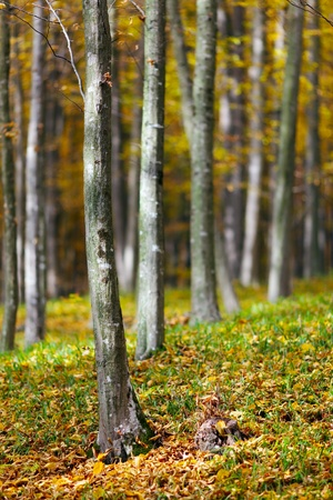 Colorful autumnal landscape with deciduous forest and many fallen leaves Stock Photo - 11151491