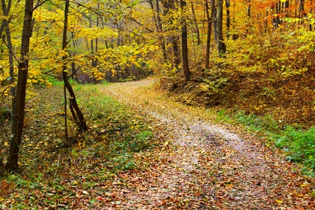 Colorful autumnal landscape with deciduous forest and many fallen leaves Stock Photo - 11151503