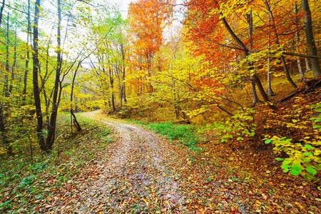 Colorful autumnal landscape with deciduous forest and many fallen leaves 版權商用圖片