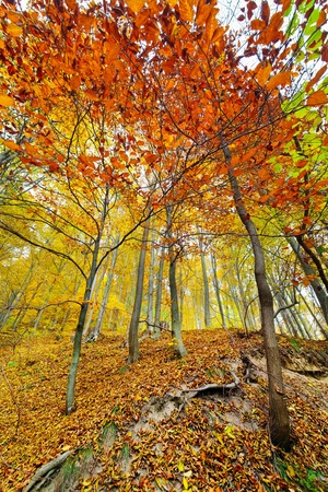 Colorful autumnal landscape with deciduous forest and many fallen leaves Stock Photo - 11151522