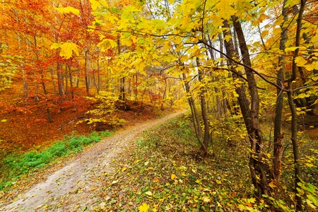 Colorful autumnal landscape with deciduous forest and many fallen leaves Stock Photo - 11151519