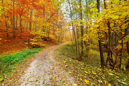 Colorful autumnal landscape with deciduous forest and many fallen leaves photo