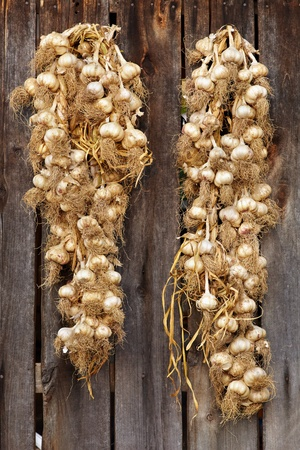 Two strings with garlic hanging on a rustic wooden wall photo
