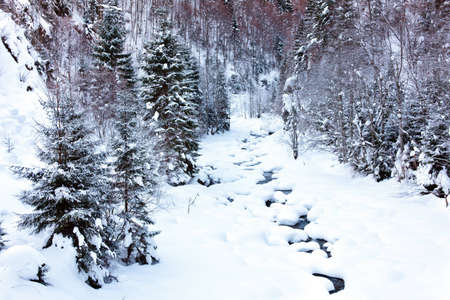 Alpine landscape with creek in the winter Stock Photo - 12575114