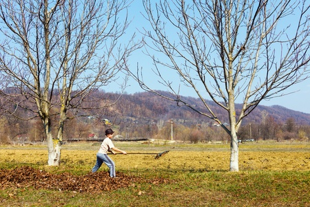 Young boy in hat spring cleaning in a walnut orchard with a rake photo
