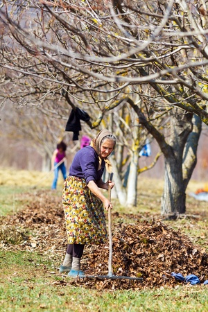 Senior rural woman and her daughter with rakes, spring cleaning in a walnut orchard photo