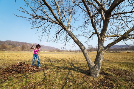 Young woman with a rake spring cleaning in a walnut orchard Stock Photo - 13029870