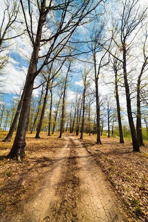 Landscape with dirt road in a beech forest with blue sky and clouds Stock Photo - 13220564