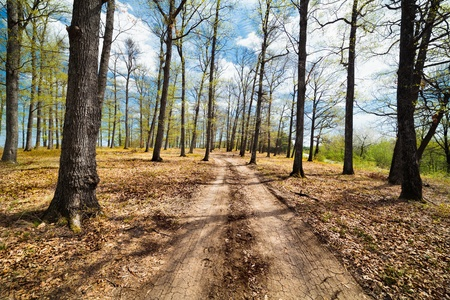 Landscape with dirt road in a beech forest with blue sky and clouds Stock Photo - 13220569