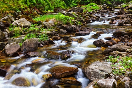 riverside tree: Landscape with river flowing through rocks Stock Photo