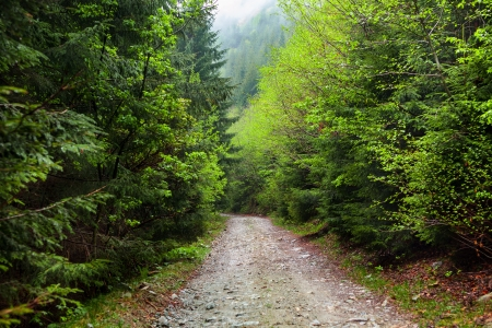 Landscape with a road through forest Stock Photo - 13820587