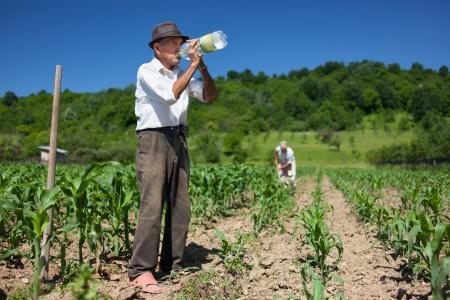 old farmer: Old man having a break from work, drinking water