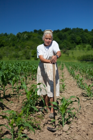 Old rural woman tiller weeding in the corn field photo