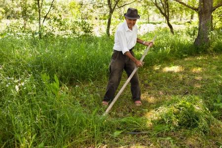 scythe: Old farmer mowing the lawn near the forest with a vintage scythe
