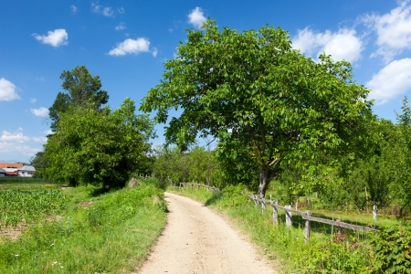 Landscape with a dirt road in the countryside Stock Photo - 15662829