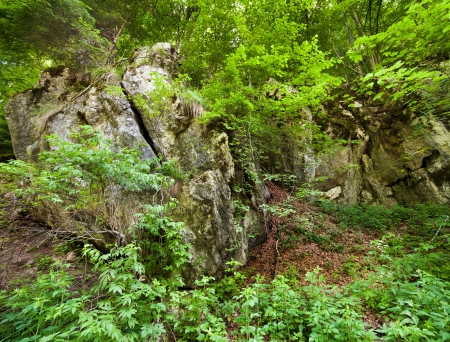 Landscape with huge rocks in the lush forest Stock Photo - 15662911
