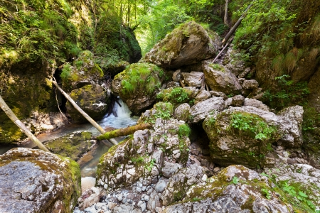 Landscape with lush forest and a river flowing through mossy boulders photo