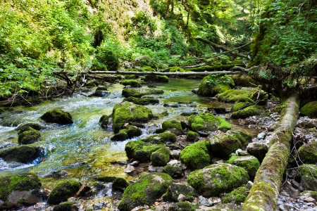 Landscape with lush forest and a river flowing through mossy boulders Stock Photo - 15662914