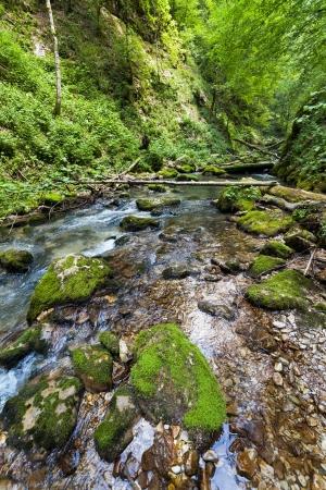 Paysage avec des forêts luxuriantes et une rivière qui coule à travers des rochers moussus