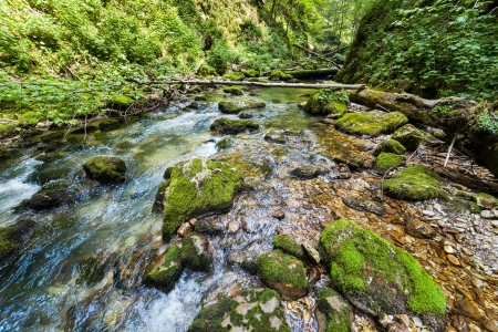 Landscape with lush forest and a river flowing through mossy boulders Stock Photo - 15662967