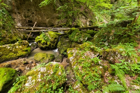 Canyon valley with mossy boulders in mountains Stock Photo - 15662961