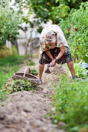 weeding: Old rural woman weeding in her garden with a hoe