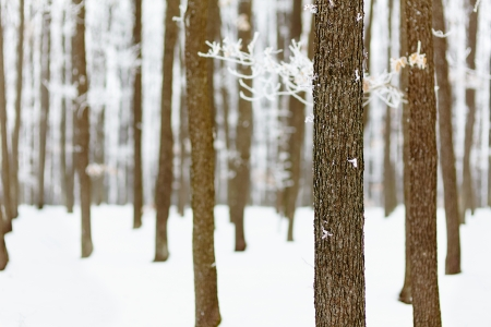 Landscape with frozen forest of oak trees with selective focus Stock Photo - 17324651