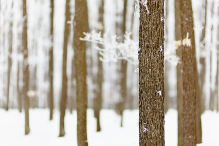 Landscape with frozen forest of oak trees with selective focus Stock Photo - 17324654