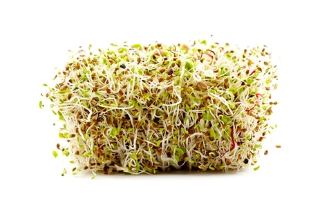 Mix of various germ sprouts isolated on white background photo