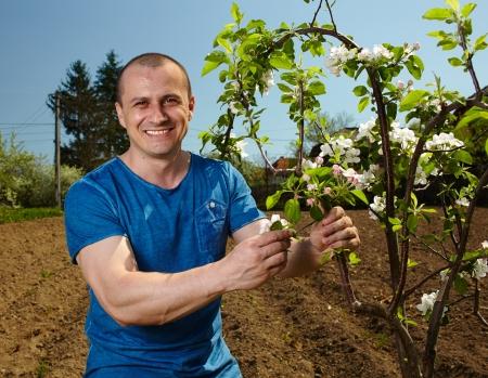 joven agricultor: Joven agricultor comprobar las flores en un �rbol de manzanas Foto de archivo