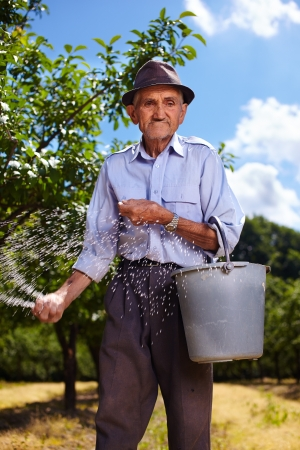 Senior farmer doing seasonal work, spreading fertilizer in a plum trees orchard Stock Photo - 20245014