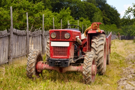 Old red tractor in an orchard in the daylight photo
