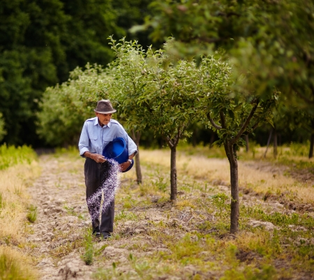 Senior farmer doing seasonal work, spreading fertilizer in a plum trees orchard Stock Photo - 20245017