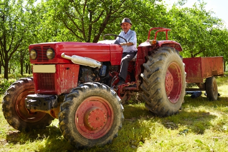 Senior farmer driving his old tractor with trailer through a plum trees orchard photo