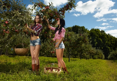 Portrait of two attractive young women picking apples in the orchard photo