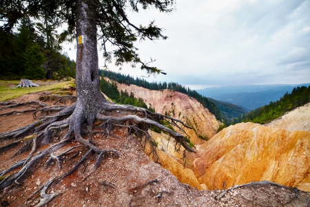 Marked tree on a hiking trial in Ruginoasa Pit from Apuseni mountains photo