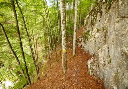 steep cliffs sign: A hike trail in a forest in the mountains on a summer day