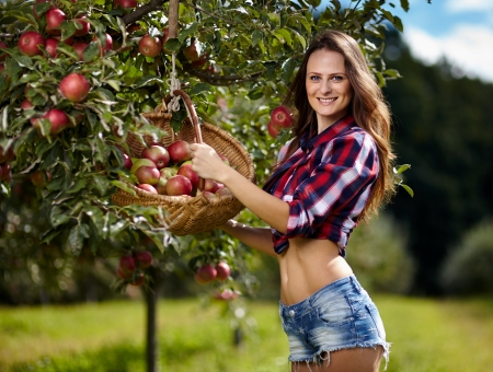 farm girl: Closeup of beautiful sexy woman picking apples in the orchard