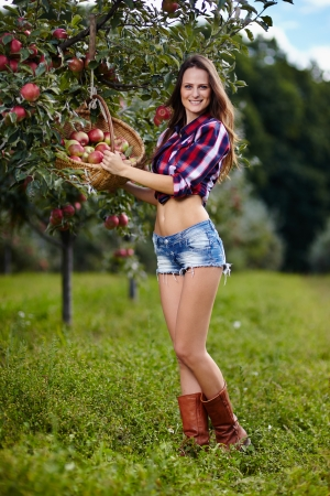 Sexy young woman picking apples in the orchard photo