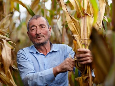 Closeup of farmer at corn harvest photo