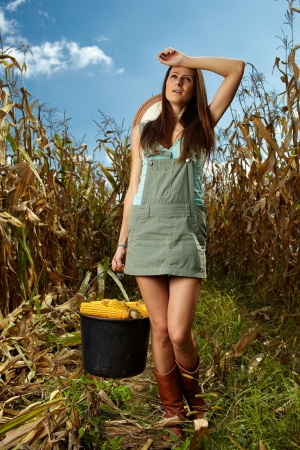 Tired woman farmer carrying a bucket full of corn cobs in the cornfield at harvest photo
