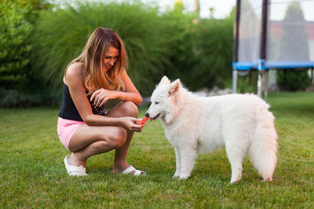 Woman playing with her samoyed dog on the grass photo