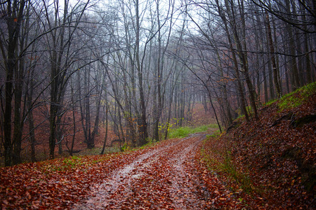 Landscape with a road into the forest, in the autumn photo